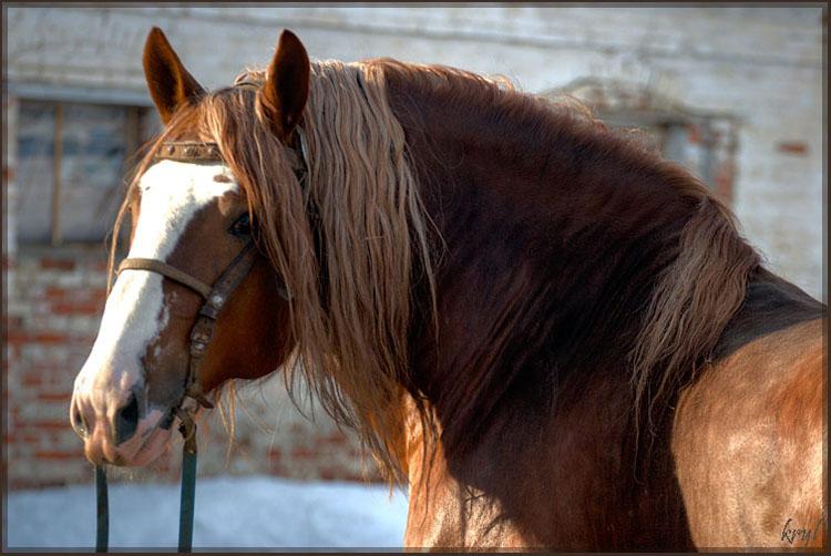http://horse35.ucoz.ru/_ph/7/851894692.jpg
